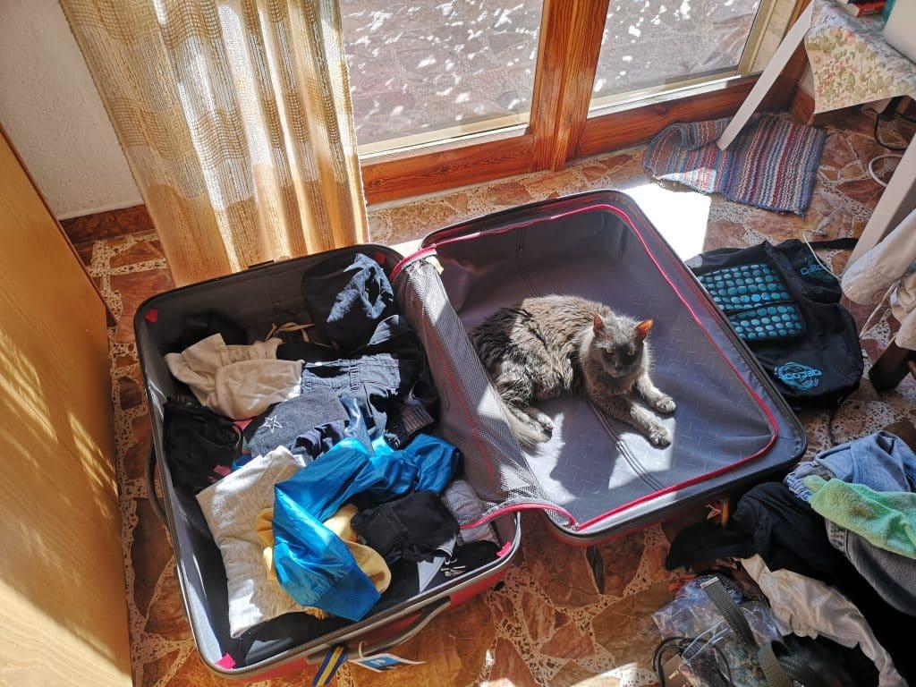 gogo in valigia al sole
